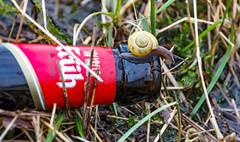 Schneckenfalle (wb.fotografie) Tags: bier kölsch schnecke falle alkohol gras flasche