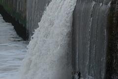 IMG_0521 (monika.carrie) Tags: monikacarrie wildlife scotland aberdeen waves
