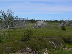 137 Brännåker - Granliden +- 600 m.o.h. Lappland Dorotea / Vilhelmina Kommun (What about the Arctic 3) Tags: 2012 sverige sweden vilhelmina dorotea