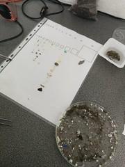 Microplastics (MarBio Abbie) Tags: microplastic plastic stem science portopim azores faial marine biology marinebiology labwork lab laboratory pollution plasticpollution conservation
