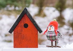 Birdy in the Snow (Karen_Chappell) Tags: bird snow red birdhouse wood wooden paint painted xmas noel holiday christmas snowy snowing stilllife canada newfoundland stjohns nfld weather bokeh decor decoration