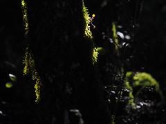 Sierras Subbéticas Spain Andalusia Provincia de Córdoba © Naturpark Spanien Andalusien © Parque Natural España Andalucía © (hn.) Tags: zuheros provinciadecordoba spain europe andalusia andalucia spanien eu europa andalusien heiconeumeyer copyright copyrighted tp2018anda es españa sierrassubbéticas parquenaturaldesierrassubbéticas parquenatural sierra sierras subbéticas subbética naturpark tree baum flora vegetation natur nature wald wood forest gegenlicht backlight contraluz