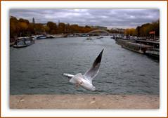 J'men vais voir de plus près le trafic sur la Seine . . . HSS (nickylechatreux) Tags: oiseau seine automne animal eau environnement faune fallseason bateau nature nuages mouvement movement hss sliderssunday