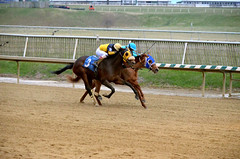 "2018-11-30 (48) r9 Trevor McCarthy on #3 Tri Poker for the win (JLeeFleenor) Tags: photos photography md marylandhorseracing maryland marylandracing laurelpark jockey جُوكِي ""赛马骑师"" jinete ""競馬騎手"" dżokej jocheu คนขี่ม้าแข่ง jóquei žokej kilparatsastaja rennreiter fantino ""경마 기수"" жокей jokey người horses thoroughbreds equine equestrian cheval cavalo cavallo cavall caballo pferd paard perd hevonen hest hestur cal kon konj beygir capall ceffyl cuddy yarraman faras alogo soos kuda uma pfeerd koin حصان кон 马 häst άλογο סוס घोड़ा 馬 koń лошадь outdoors outside"