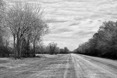 NX6_181216_Rokker45mm_54bw (b.r.carpenter) Tags: blackwhite sony nex6 rokkor 45mm clouds trees path
