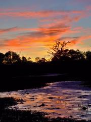 Sunset over the Marshes (12 23 2018) (PhotoDocGVSU) Tags: winterinsavannah milddecember landscape savannahga sony7riii whitemarshisland marshes sunset silhouttes