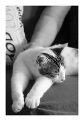 Max (DavidB1977) Tags: cat chat katze fujifilm x100f monochrome nb bw