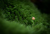 Tiny (RWGrennan) Tags: tiny moss mushroom macro green dew water drops small outdoors light upstate newyork ny woods forest rwgrennan ryan grennan rgrennan nikon d610 100mm dof fungus tokina