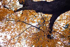 Graz November 2018_Karin Wernig_0091 (Foto-Karin.at) Tags: graz stadtpark austria herbst autumn technic natur dach altstadt überdendächern ginko wind