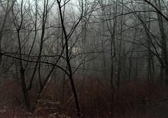 light in the wood (bidutashjian) Tags: woods trees forest winter dark moody evening misty foggy mysterious nikon d3500 light shadow mystery landscape