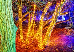 lights in the bosque (JoelDeluxe) Tags: rol riveroflights abq biopark nm december 2018 albuquerque biological park pnm light display colors lights sculptures fantasy newmexico hdr joeldeluxe