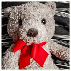 Day 12 - Pop of Colour (Christin Tietjen) Tags: 365project 365 red coloursplash teddy love