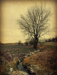 A November Scene (Dave Linscheid) Tags: tree cottonwoodtree snow field creek rural farm country agriculture texture textured butterfield watonwancounty mn minnesota usa picmonkey