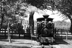 BWLR 75831bw (kgvuk) Tags: bwlr bredgarandwormshilllightrailway kent railway narrowgauge train steamtrain locomotive steamlocomotive steamengine 042t zambezi woodburner swantoncrossing limpopo 060t