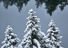 Snowy trees with lake and reflections on the background (Digikuvaaja) Tags: frozen tree hoarfrost wintertime woodland woods forest snow pine coniferous nature plant winter white closeup evergreen season holiday natural branch background christmas cold covered snowy outdoor blue weather wood ice twig december landscape hoar seasonal environment detail decorative beautiful nobody icy cone january wintry snowcovered finland