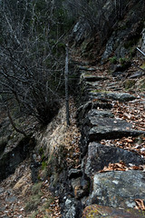 Stairway to Erebor (It's me Gio) Tags: tolkien nature stairs mountain path fantasy erebor leaves winter forest wood trees rocks thelordoftherings world wild grey colours