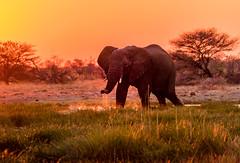 DSC00390 (philliphalper) Tags: namutoni etosha namibia elephant sunset