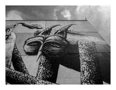 170726_123306_oly-PEN-f_oostende_the crystal ship 34/55 (A Is To B As B Is To C) Tags: aistobasbistoc b belgië belgium oostende ostend haven harbour vuurtorenwijk victorialaan phlegm graffiti street streetart sky clouds olympus penf bw blackwhite blackandwhite monochrome urban thecrystalship bird