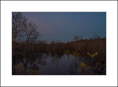 Sycamore Moonrise (David in NC) Tags: full moon moonrise wetland november flood sycamore tree sunset autumn