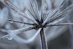 (vieubab) Tags: branchage branches bokeh calme extérieur feuillage forêt feuille flouartistique gouttes gouttedeau glace grosplan hiver hardelot lumière macro nature plante sony