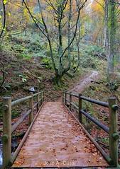 Hayedo de Montegrande. Teverga (Asturias) (Jose A. Casal) Tags: hayedo de montegrande teverga asturias