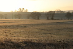 Morgensonne nach Frostnacht (julia_HalleFotoFan) Tags: bischofroda frost morgensonne thüringen wartburgkreis