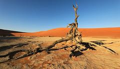 Deadvlei - Sossusvlei - Namib desert - Namibia (lotusblancphotography) Tags: africa afrique namibia namibie namibdesert sossusvlei deadvlei dunes tree arbre ciel sky sand sable landscape paysage