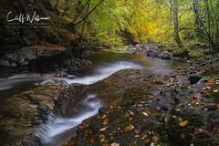 The Moness Burn (cliffwilliams449) Tags: landscape ocr2016 scotland aberfeldy autumn river stream moness monessburn birksofaberfeldy gold colours longexposure