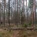 Mannerheim Line, Russia