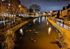 Ducks and Geese on the Huddersfield canal (ianclarke82) Tags: ducks geese wildlife water canal bridge night nightphotography huawei mobilephotography stalybridge tameside huddersfieldcanal birds towncentre