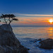 Last January sun at the lone cypress