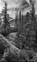 Sunrise over Gore Creek, Vail. CO (HarrySchue) Tags: colorado landscape nature rockymountains vail blackwhite mountains sunrise hiking hikes streams trees serene nikon reallyrightstuff clouds