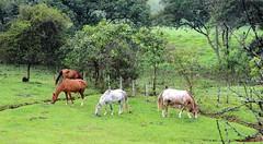 Cavalos. Pedra Selada. Mauá, Rio de Janeiro. (Rubem Jr) Tags: pedraselada riodejaneiro paisagem landscape nature natureza viscondedemaua brasil