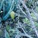 Gran Canaria greens