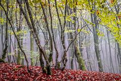 ALTUBE zarra 7tif (juan luis olaeta) Tags: paisajes landscape natura brilliance fog lightroom photoshop forest bosque basoa pagoa altube nieblas autumn otoño udazkena