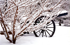 "Cincinnati - Spring Grove Cemetery & Arboretum ""Civil War Section"" (David Paul Ohmer) Tags: spring grove cemetery arboretum cincinnati ohio springgrove cemetary civil war canon winter snow"