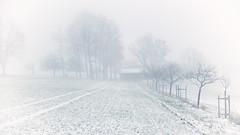 ... (a.penny) Tags: niedernhausen hessen taunus fuji finepix fujifilm x10 apenny idsteiner land highkey nebel fog