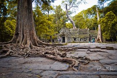 Rooted in Time (Richard Ian Laureles) Tags: d3100 nikon photography tombraider adventure travel nature siemreap southeastasia asia ancient temple history old tree cambodia taprohm
