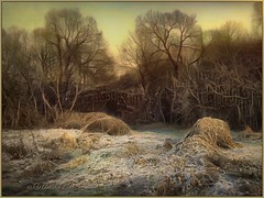 The first frost. (odinvadim) Tags: iphoneart landscape iphoneonly winter iphonex iphoneography specialist mytravelgram painterlymobileart iphone snapseed evening artist instapickskyart frost travel textured forest editmaster textures icolorama