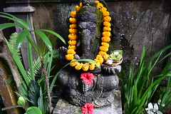 A closer view of the Ganesha statue in the grounds of Bliss (shankar s.) Tags: seasia indonesia java bali islandparadise baliisland touristdestination hotel lodgings accomodation resort entrance blissubudspaandbungalow ubudbali reception garland statue idol hindufaith hindureligion hinduism prayer shrine garden landscaping