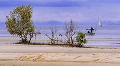...from Buckley's Hole #2 (Fat Burns ☮) Tags: landscape blackandwhite bw nikond500 sigma150600mmf563dgoshsmsports sea ocean bribieisland clouds cloudy boat pumistonepassage mangrove sailingboat beach sand