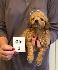Kizzie Girl 1 pic 3 12-9
