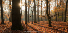 The Woods, Netherlands (CvK Photography) Tags: autumn autumncolors canon color cvk enschede europe fall forest landscape nature netherlands outdoor overijssel sunray twente nederland nl wood tree trees