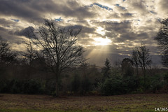 Sunbeam Landscape (Jamie Medford) Tags: 2019 january kent landscape sunbeam trees tunbridgewells winter