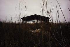 _DSC1662 (Oleg Green (lost)) Tags: autumn november vyatka province walking raw unedited voigtlander sskopar 4025 apsc nex5