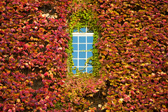 Fall Facade (Walter Quirtmair) Tags: ifttt 500px fall autumn popular tags red orange colorful window black grass sky reflection facade wall house quirtmair england cambridge