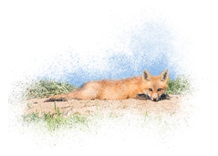 Red Kit Fox #15 - Relaxing on Tummy (Patti Deters) Tags: 15 mammal animal baby carnivore cute fourlegs fox fur fuzzy kit predator redfox soft vulpes wildlife young red tan brown blackpaws ears eyes nose snout dirt grass stretch prone laying long relax relaxing tummy stomach flat omnivore digitalart pattideters
