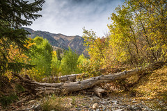 GY8A8300.jpg (Brad Prudhon) Tags: 2018 cottonwoodcampground fall nephi september utah autumn colors