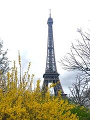 Paris, France (miamism) Tags: mipim2019 mipim triptocannesfrance mipimcannes europe triptoeurope rickandines miamismsalesteam teammiamism globalpartners cannestoparis parisfrance paris eiffeltower