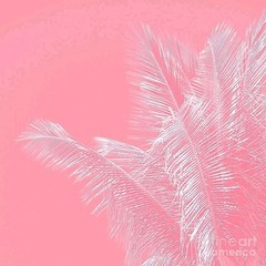 Photo (PuffPink) Tags: pink puff